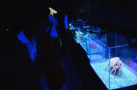 渔业展,荧光鱼,观赏鱼,厦门休闲渔业博览会