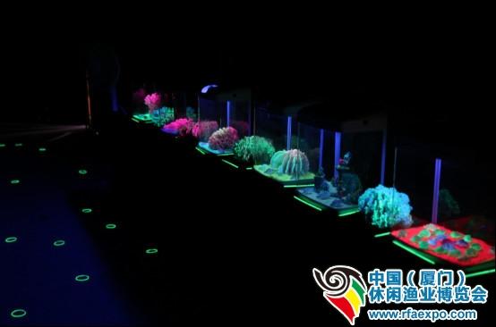 """厦门休闲渔业展-""""暗夜城堡""""是荧光鱼的观赏天地,展出了来自台湾的各种荧光小鱼、珊瑚等等"""