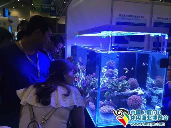 水族区人气旺,观赏鱼、观赏虾都很受欢迎