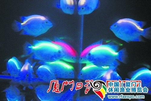 """在""""暗夜城堡""""展示的台湾荧光鱼-渔业博览会"""