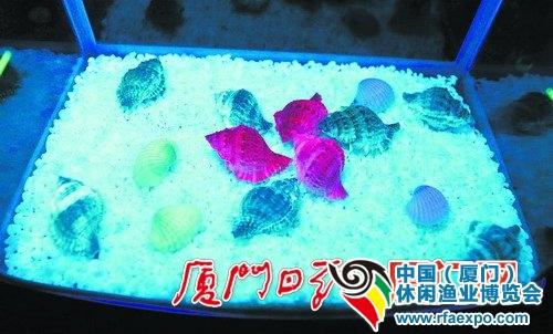 """在""""暗夜城堡""""展示的荧光贝类。渔业博览会"""
